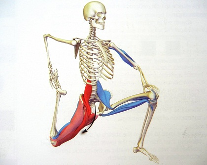 stretching_nyujtas_psoas